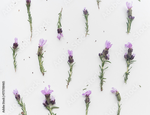 Papiers peints Lavande High angle full frame view of lavender flowers with stems arranged on white background