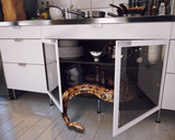 the snake in the kitchen - 175797884