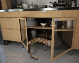 the snake in the kitchen - 175797899