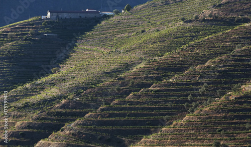 Fotobehang Nachtblauw Landscape view of a vineyard in the valley of Douro, Portugal