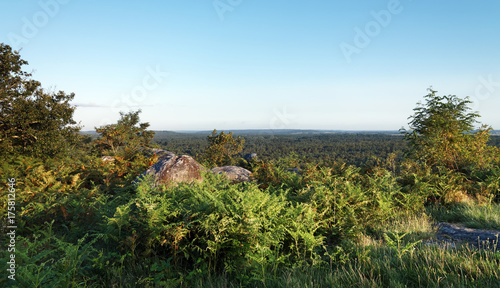 Fotobehang Pool Point de vue du rocher Corne-biche en forêt de fontainebleau