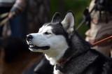 Dog show..Kiev,Ukraine. - 175825208