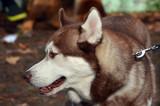 Dog show..Kiev,Ukraine. - 175825228