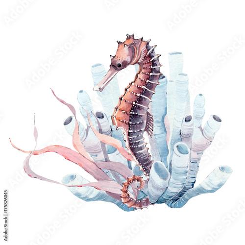 recznie-rysowane-akwarela-konika-morskiego
