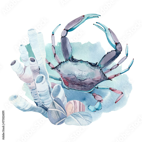 hand drawn watercolor crab. - 175826091