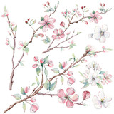 hand drawn apple tree branches and flowers, blooming tree.
