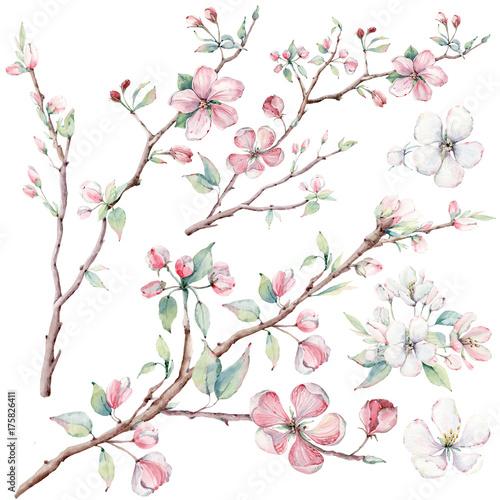 recznie-rysowane-galezie-jabloni-i-kwiaty-kwitnace-drzewa