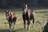 Mare and foal - 175830233