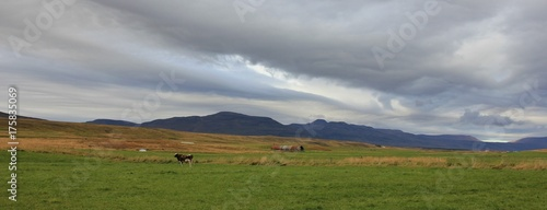 Rural scene near Saudarkrokur, Iceland. Moody sky over a green meadow and mountains. - 175835069