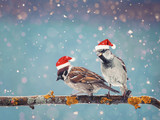 little funny birds sitting on a branch in winter in the snow in red Christmas hats - 175839860