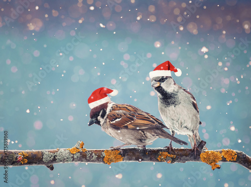 little funny birds sitting on a branch in winter in the snow in red Christmas hats
