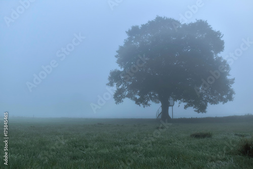 Old oak tree with spiral staircase in misty rural landscape.