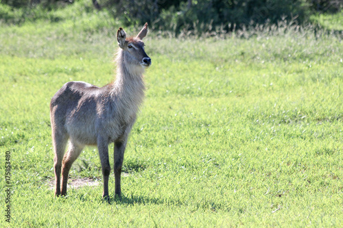 Wildlife South Africa, Kruger Nacional park Poster
