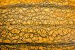 orange pumpkin skin texture - 175856653