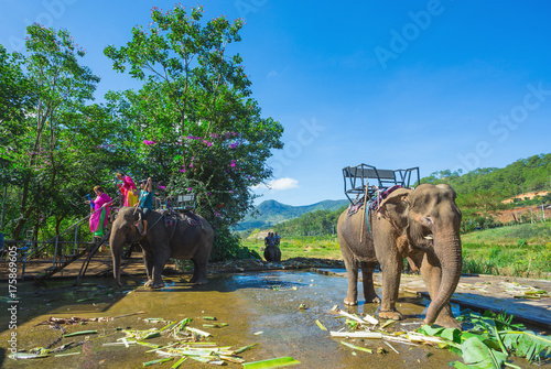 the farm of elephants not far from Dalat Poster