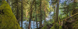 Panorama Of MOss Forest Below Sahalie Falls - 175882467