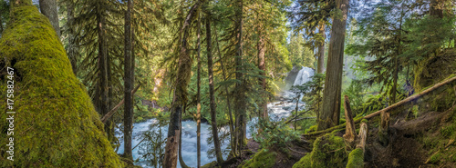 Panorama Of MOss Forest Below Sahalie Falls