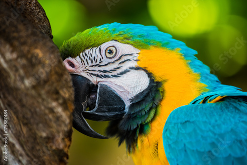 Fotobehang Papegaai Parrot, lovely bird, animal and pet in the garden