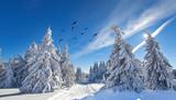 romantischer Wintertag im Wald