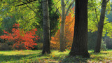 Autumn trees in the garden with sunlight / Pannonhalma Arboretum, Hungary - 175911022