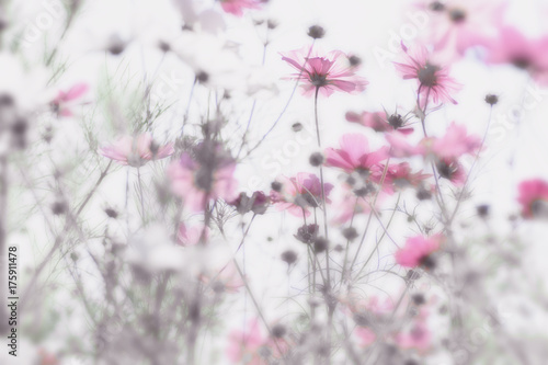 Pink flowers with soft and blurry white background . Dreamy effect. © Dimitris