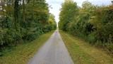 Idyllischer Weg durch die Au - 175913496