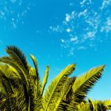 Tropical minimal. Palm leaf.
