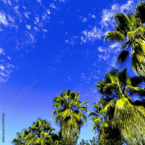 Plexiglas Donkerblauw Palms fashion minimal art design
