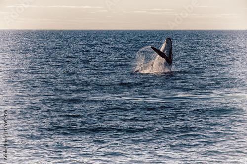 underwater landscape in australia a free whale in the ocean voltagebd Gallery