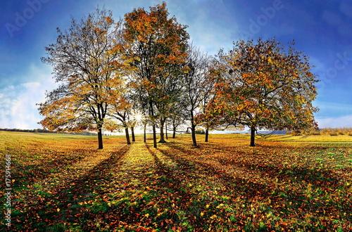 Fridge magnet Baumgruppe im Gegenlicht auf dem Frauenberg bei Eichstätt