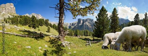 Schafherde im Puez Geisler Nationalpark - 175915622