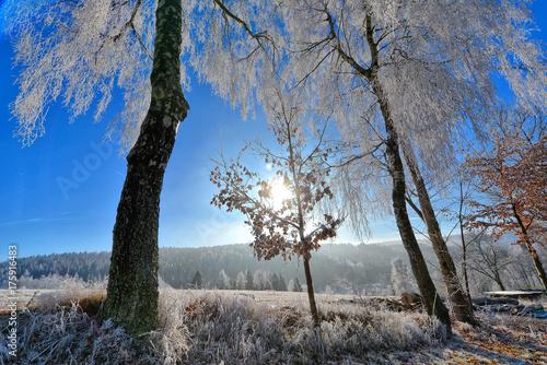 Papiers peints Gris Landschaft im Herbst mit Raureif und Frost