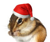 Funny animal with Santa Claus hat, Merry Christmas and Happy New Year concept - 175924254