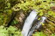 Cascada en el Río Alba. Ruta del Alba. Parque Natural de Redes, Asturias, España.  - 175926464