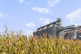 Corn field and set of storage silos. - 175934482