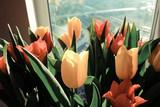 tulips near the window