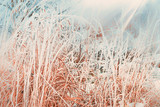 Winter nature background with close up of frozen and snow covered grass - 175941462