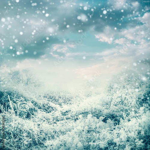 Amazing winter landscape with frozen trees and plants at beautiful sky background with snow