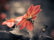 fall flower closeup at abstract background