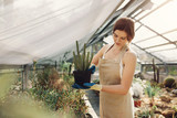 Gardener taking care of cactus plants at greenhouse - 175957873