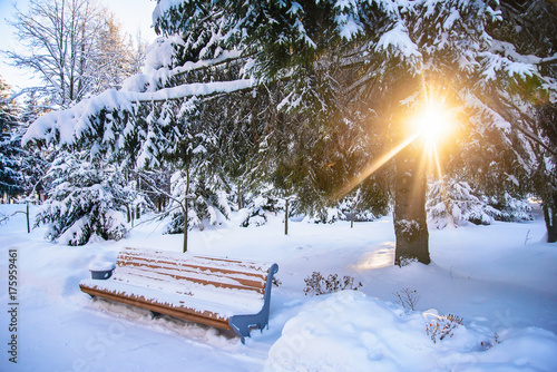 Winter landscape with a bench and sunlight