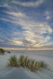 Strandhafer im Sonnenuntergang II - 175959610