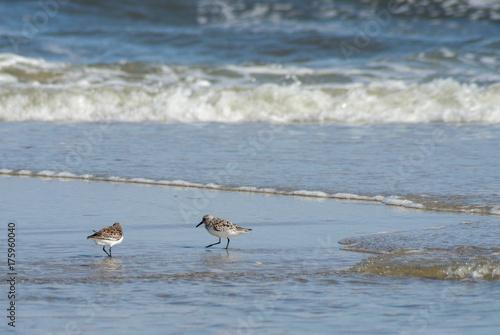 Deurstickers Noordzee Strandläufer II