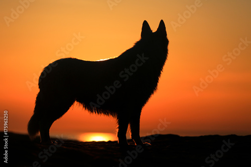 Fotobehang Wolf shadow figure