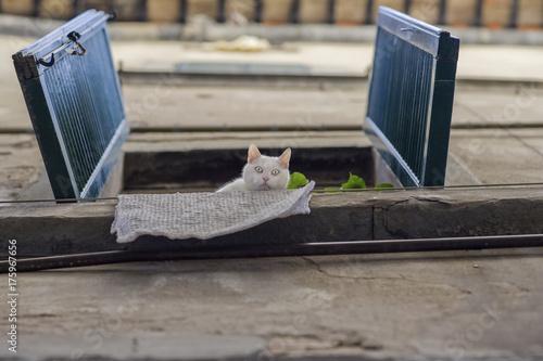 Spoed canvasdoek 2cm dik Toscane The Cat
