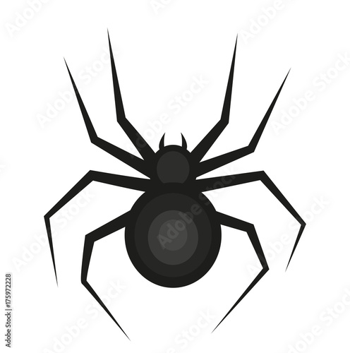 Fototapeta Spider icon is a flat style. Isolated on white background. Vector illustration