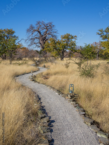 Fotobehang Baobab Grey gravel path with lamps leading through high dry grass to Baobab tree, Botswana, Southern Africa
