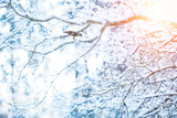 Detail of frozen tree branches with raven bird - 175974036