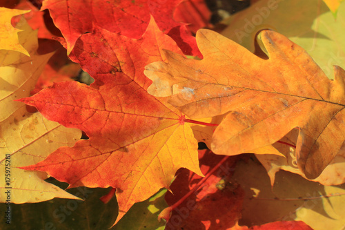 autumn leaves of maple and oak on the water - 175975281