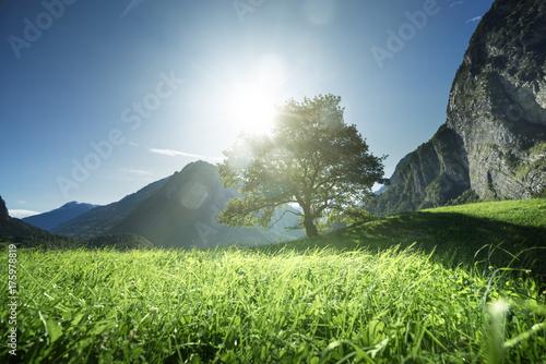 Fridge magnet Idyllic landscape in the Alps, tree, grass and mountains, Switzerland